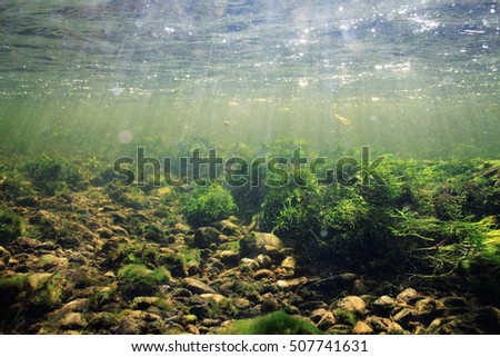 underwater scenery, algae, clean clear water, mountain river cleanliness
