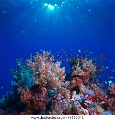 underwater scenery beautiful coral reef full of colorful fish