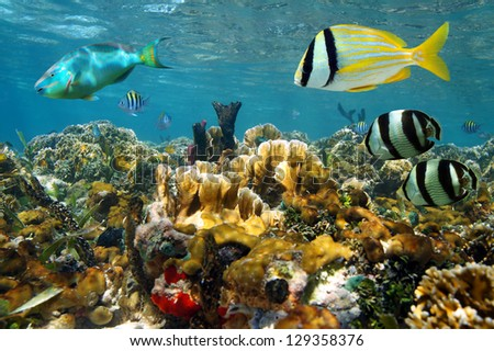 underwater coral photography  Underwater Reef Background Underwater