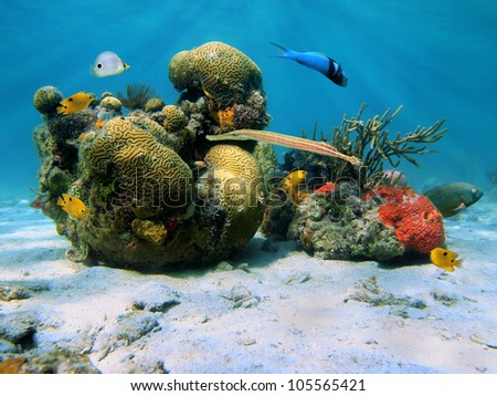 Underwater scenery in the Caribbean sea with brain coral and tropical fish