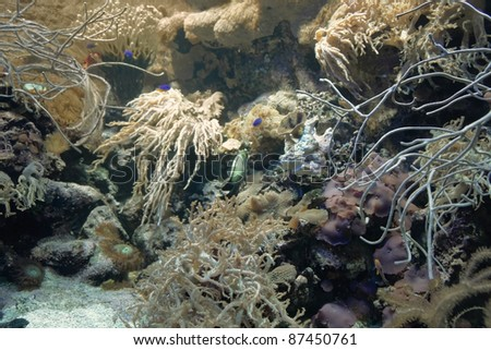 underwater scenery showing a colorful coral reef detail with various animal species