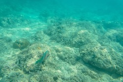 Underwater scenery with mackerels. Andaman and Nicobar Islands. The concept of snorkeling and diving