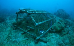 Underwater Scenic View of a Large Rattan Net Fishing Trap with Aquatic Life struggling inside. Close Up Nature of captive Aquatic Animals from deep blue - green water seabed. Gulf of Thailand.
