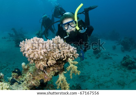 underwater scuba divers enjoy a dive with pink coral