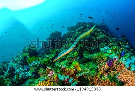 Underwater sea snake scene. Sea snake swim underwater scene. Underwater sea snake panorama. Underwater world view #1194915838