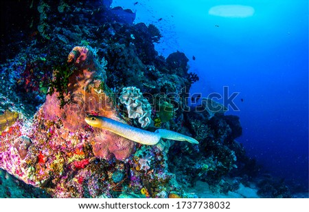 Underwater sea snake swimming undersea