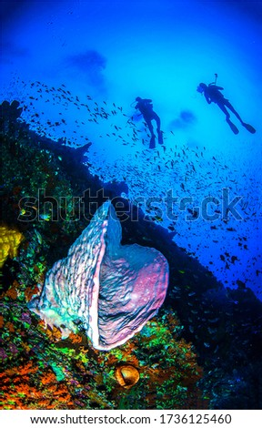 Underwater sea sponge coral fish shoal. Diving underwater