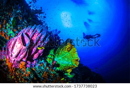 Underwater sea sponge diving scene. Diving underwater