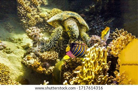 Underwater sea turtle and coral fish