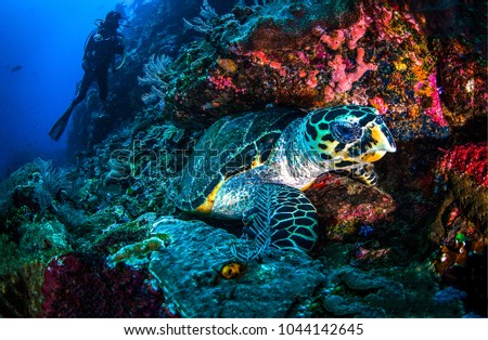 Underwater sea turtle landscape. Sea turtle underwater
