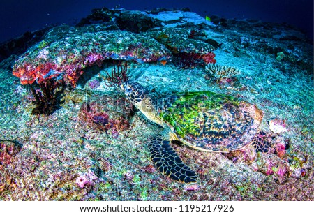 Stock Photo Underwater sea turtle view. Sea turtle undrwater scene. Underwater sea turtle landscape. Sea turtle underwater