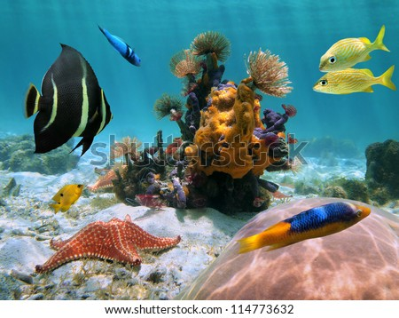 underwater seabed with sea worm, starfish, colorful coral, sponge and tropical  fish