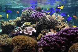 Underwater Sealife with tropical fish swimming over a corral reef