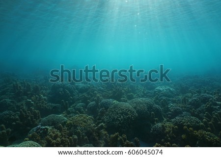 underwater seascape corals and...
