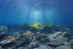 Underwater seascape natural sunbeams through water surface on a seabed with rocks and seagrass, Mediterranean sea, Catalonia, Roses, Costa Brava, Spain
