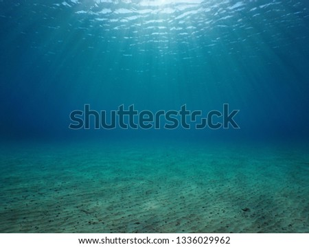 Underwater seascape sandy seabed with natural sunlight below water surface in the Mediterranean sea, France #1336029962