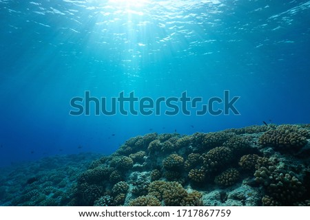 Underwater seascape, sunlight through water surface with coral reef on the ocean floor, natural scene, Pacific ocean, French Polynesia