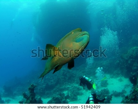 Underwater seascape with divers and napoleonfish