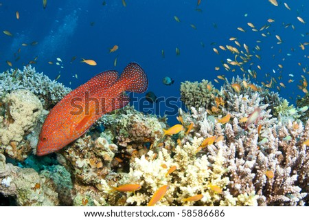 Underwater seascape with marine life and fish in the red sea