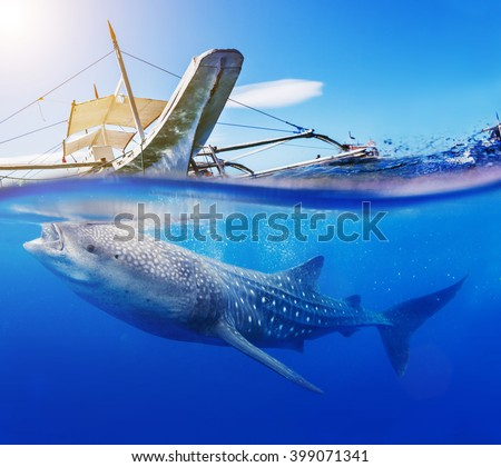 Shutterstock Underwater shoot of a whale shark