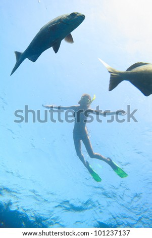 Underwater shoot of a young woman snorkeling in transparent sea and looking to a big fish fining on depth