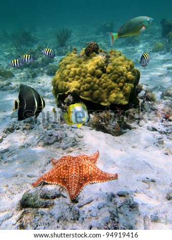 Underwater starfish with tropical fish and coral, Caribbean sea