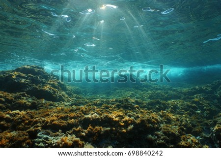 Underwater sunlight through the water surface seen from a rocky seabed with algae in the Mediterranean sea, natural scene, Catalonia, Costa Brava, Spain