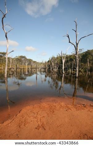 Underwater Trees, Sheldon Lagoon, Cape York, Australia