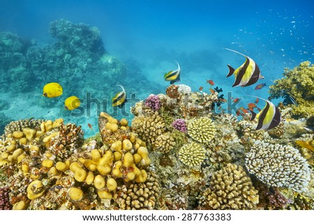 Underwater view at coral reef and fishes in Red Sea near Dahab, Egypt, Africa
