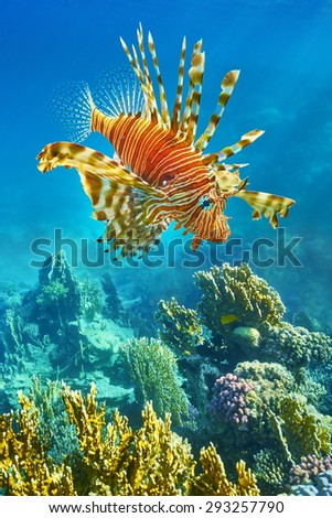 Underwater view at coral reef and lionfish in Red Sea, Egypt