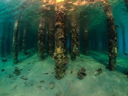 Underwater view of coral grows on the pillars of pier