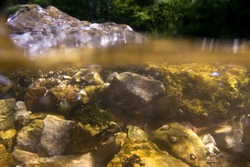 Underwater view of the Slunjcica River source in Croatia
