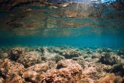 Underwater view with stones and seaweed in transparent sea. Sunlight in blue ocean