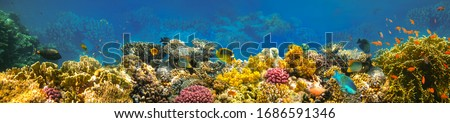 Underwater world. Coral fishes of Red sea. Egypt Сток-фото ©