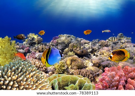 Underwater world. Coral fishes of Red sea. Egypt.