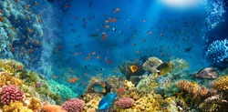 Underwater world. Coral reef and fishes in Red sea at Egypt
