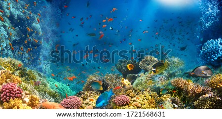 Photo of  Underwater world. Coral reef and fishes in Red sea at Egypt