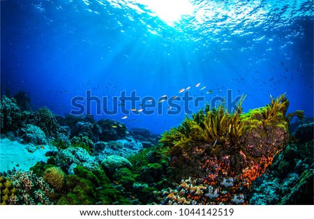 Underwater world coral reef panorama landscape