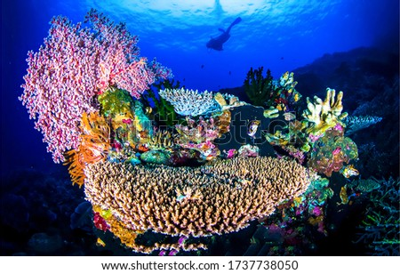 Underwater world diving scene. Coral reef underwater view