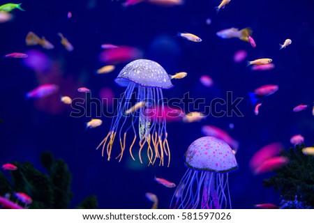 Underwater world fish Aquarium #581597026