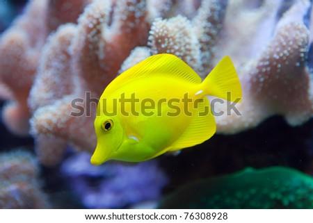 Underwater world. Fishes in corals.