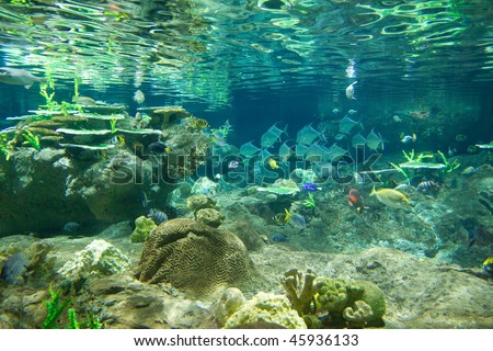 Underwater world, Hong Kong Ocean Park previous aquarium