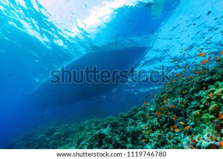 Underwater world image #1119746780
