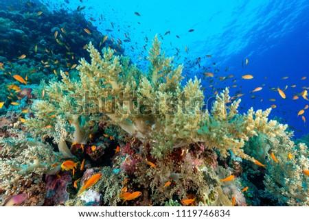 Underwater world image #1119746834