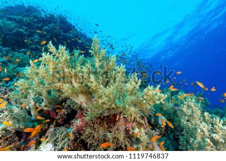 Underwater world image #1119746837