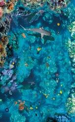 Underwater world. Images for 3D floors.Ramp. Shark. Turtle.