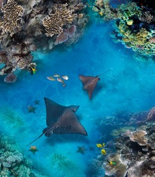 Underwater world. Images for self-leveling 3d floor. Corals. Top view. Sea Stingray