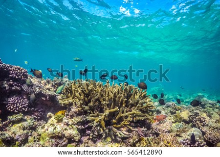 Shutterstock Underwater world landscape, colorful coral reef and blue clear water with sunlight and sunbeam. Maldives underwater wildlife, marine life, adventure snorkeling.