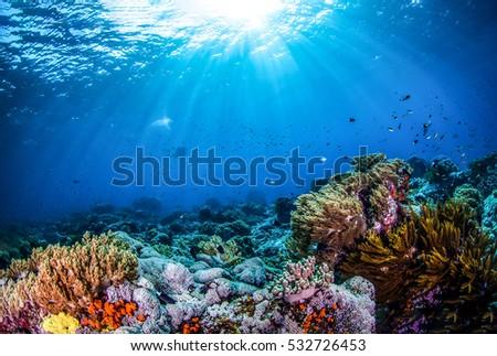 Underwater world landscape, underwater coral