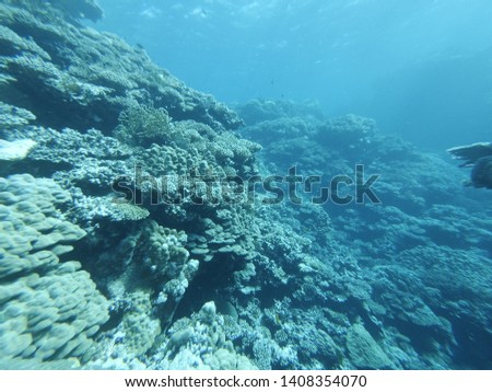 Underwater world of the Red Sea #1408354070